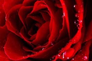 Duftspray-petali-di-rosa_Raum-und-Duft-Konzept-AG