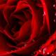 duft-stick-petali-di-rosa_Raum-und-Duft-Konzept-AG