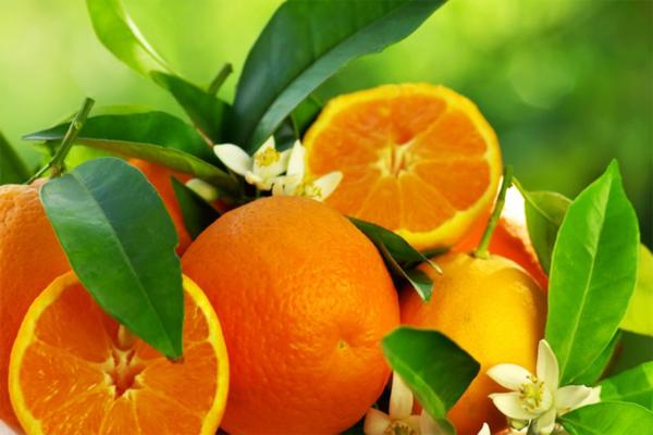 duftoel-Orangenbluete